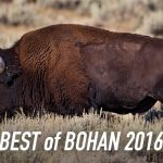 Best of Bohan 2016